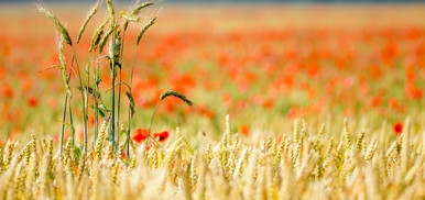 """Corsi """"Tecniche innovative per l'agricoltura sostenibile"""" e """"Gestire le certificazioni in agricoltura"""". Proroga delle iscrizioni"""