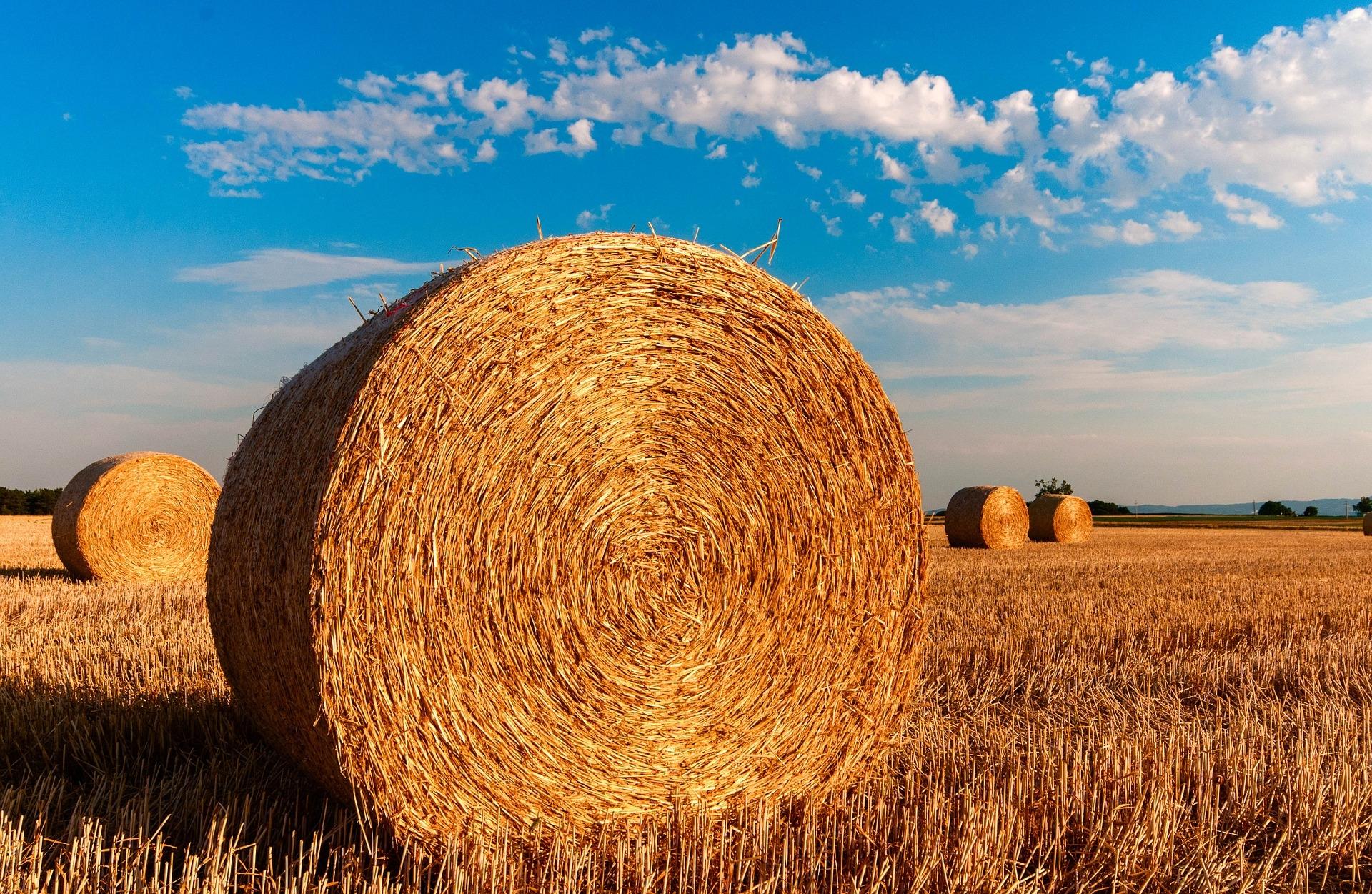 Progetti Green&Blue Economy del GAL Sinis | Nuove opportunità formative gratuite nel campo dell'agricoltura
